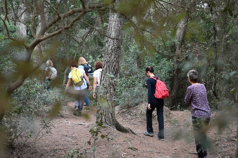 Into the woods, in Giens à Hyères - 9