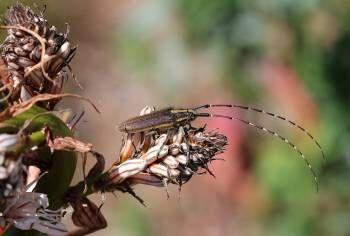 Conférence Nature – Les papillons à Hyères - 1