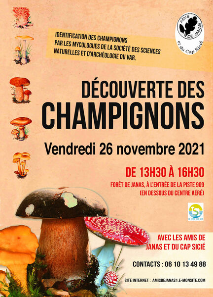 Discovering mushrooms à La Seyne-sur-Mer - 0