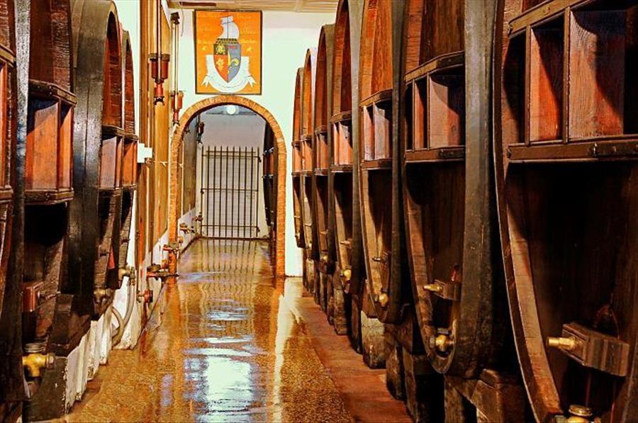 Découverte viticole: domaine Clos Cibonne à Le Pradet - 0