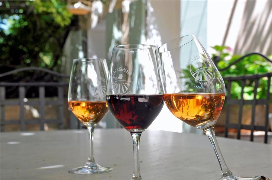 Découverte viticole: domaine Clos Cibonne à Le Pradet - 3