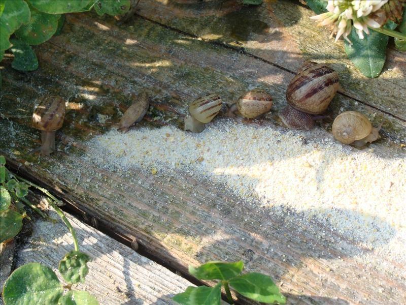 Visite, en matinée, d'une exploitation d'escargots à Le Pradet - 1