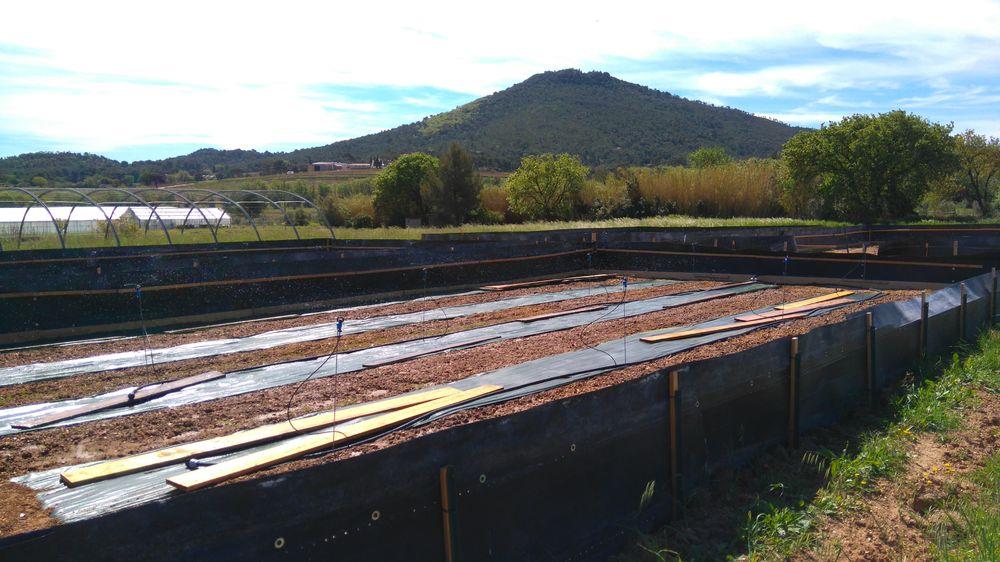 Visite, en matinée, d'une exploitation d'escargots à Le Pradet - 2