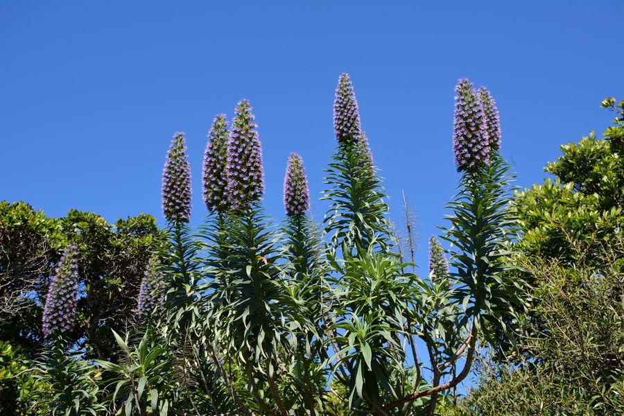 Rendez-vous aux jardins – Le Levant island à Hyères - 5