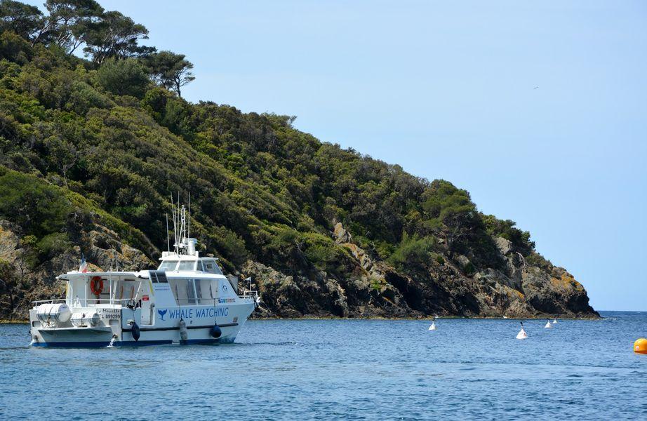 Le circuit des îles (Boat excursion) à Hyères - 5