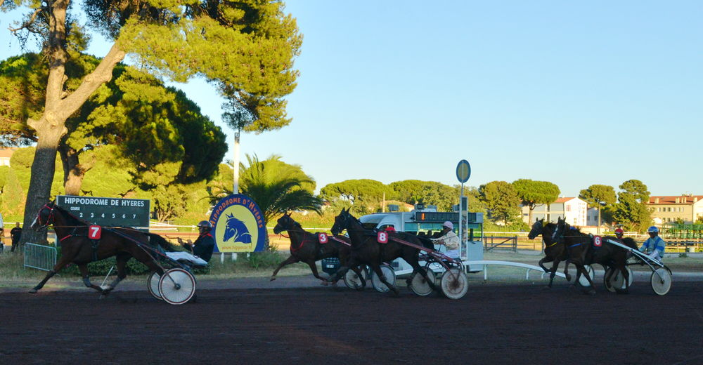 Horse race à Hyères - 5
