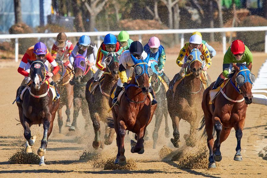 Horse race à Hyères - 0