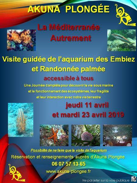 Visite guidée de l'aquarium des Embiez et randonnée palmée à Six-Fours-les-Plages - 0
