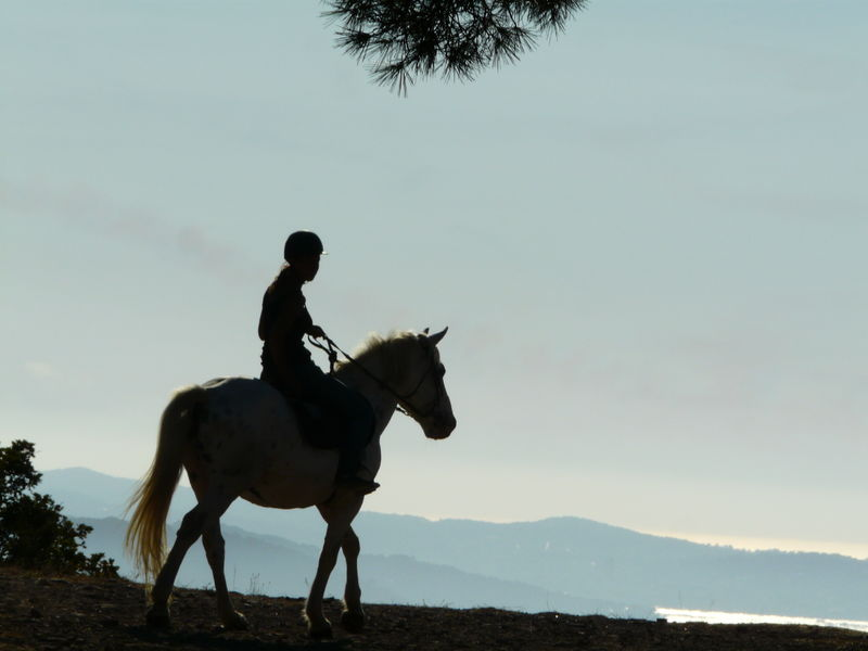 Stage d'équitation aux écuries de la Cibonne à Le Pradet - 1