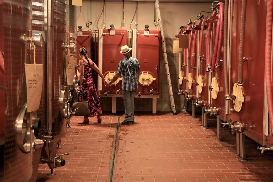 L'expérience viticole: Visite du Domaine de la Navicelle : domaine en Biodynamie à Le Pradet - 0