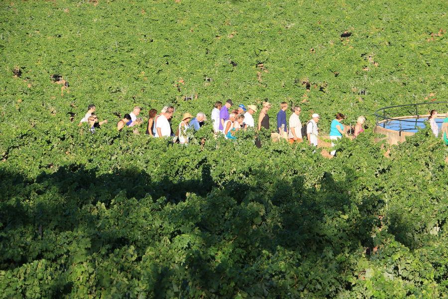 Visite Oenoludique d'un domaine viticole ( domaine de la Navicelle) en Biodynamie à Le Pradet - 0
