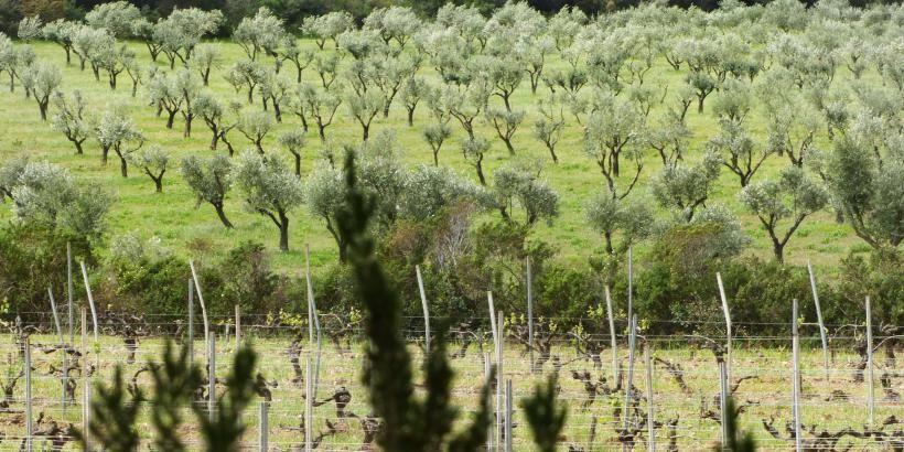 Point rencontre à Porquerolles : découverte des vergers conservatoires à Hyères - 0