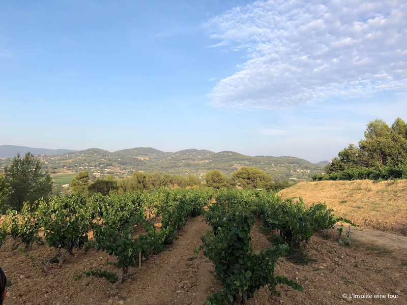 Private wine tour and wine tasting à La Valette-du-Var - 2
