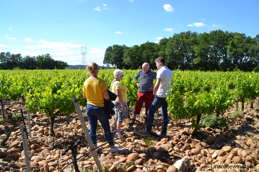Private wine tour and wine tasting à La Valette-du-Var - 4