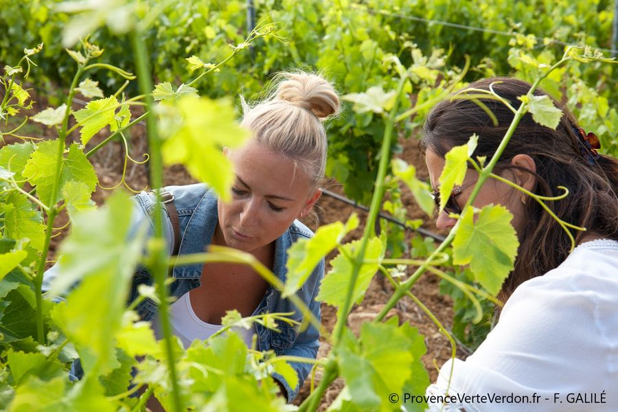 Private wine tour and wine tasting à La Valette-du-Var - 6