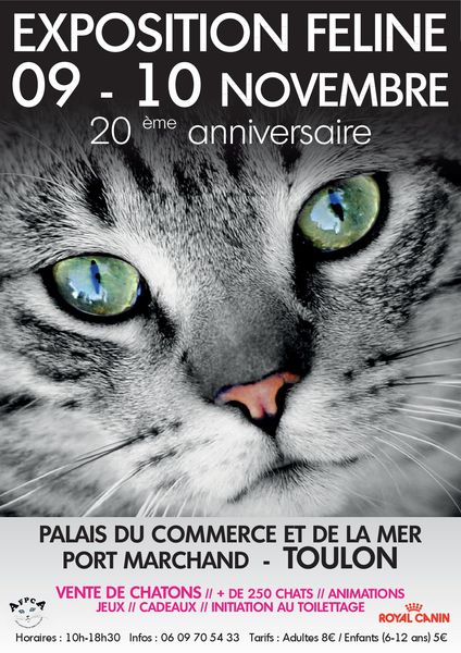 20e Exposition féline à Toulon - 0