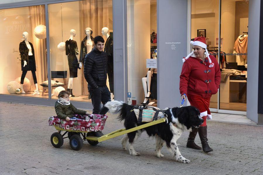 Promenade en calèche attelée par des chiens Terre-Neuve à Hyères - 0