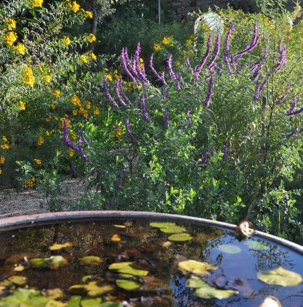 Little tales from the garden (special children's guided tour) à Hyères - 12