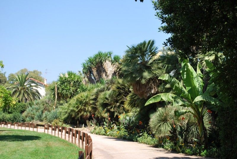 Little tales from the garden (special children's guided tour) à Hyères - 17