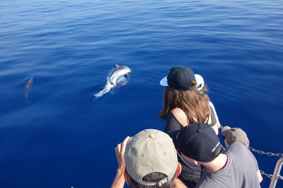 Go offshore to meet dolphins and marine mammals à Hyères - 1