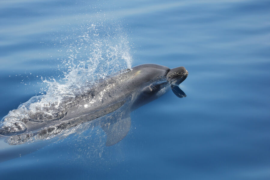 Go offshore to meet dolphins and marine mammals à Hyères - 0