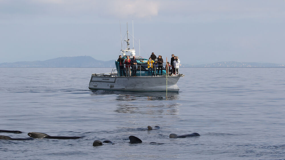 Go offshore to meet dolphins and marine mammals à Hyères - 5