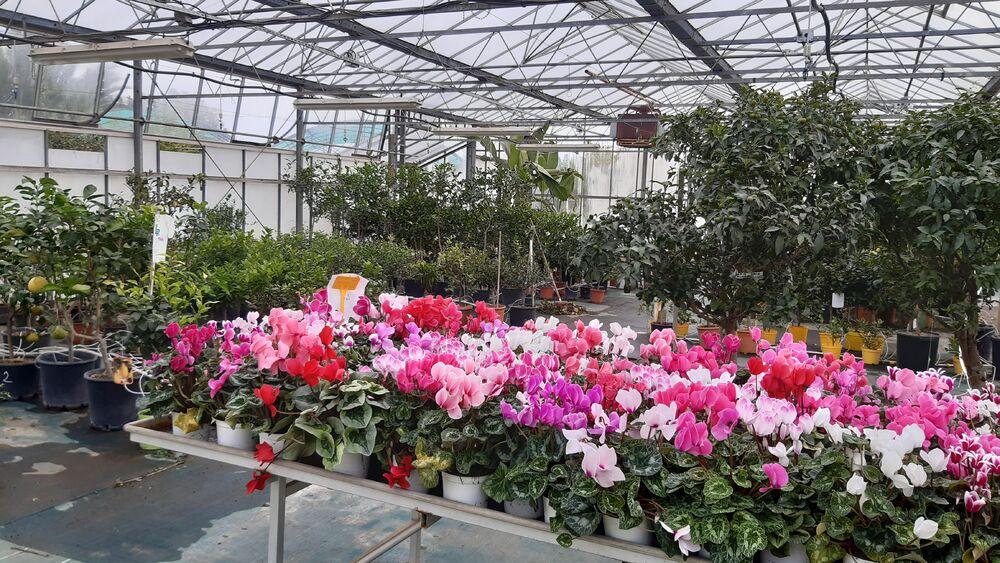 Journées vente de végétaux à Hyères - 3