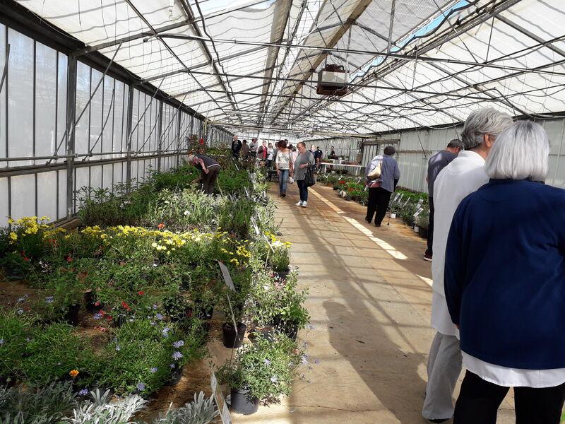 Journées vente de végétaux à Hyères - 4