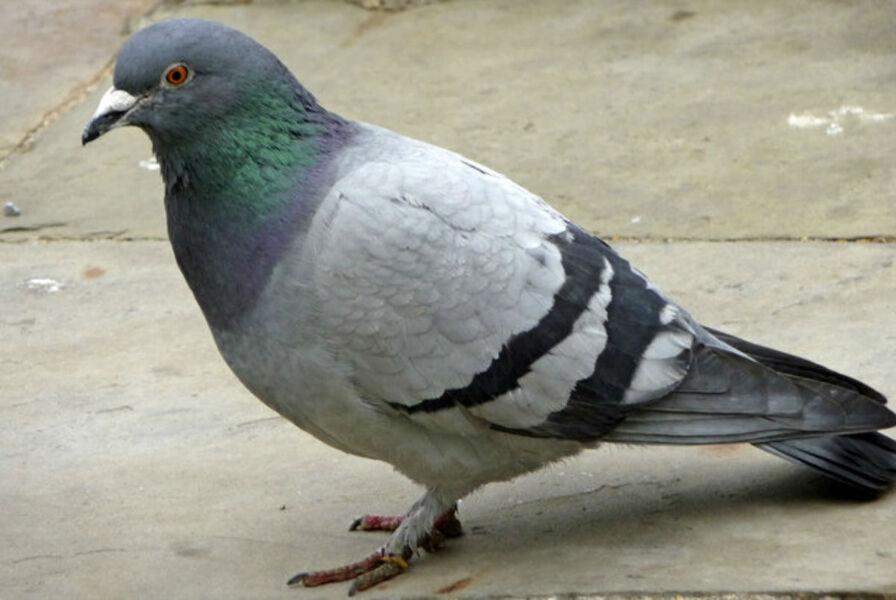 Découverte des colombes au pigeonnier pédagogique à La Seyne-sur-Mer - 0