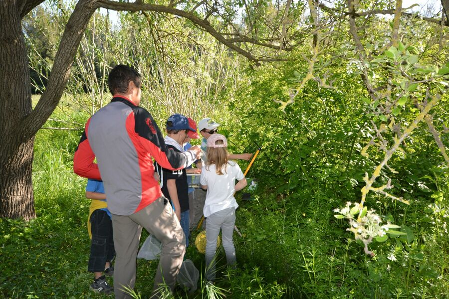 The short course in the bush (special children's guided tour) à Hyères - 7