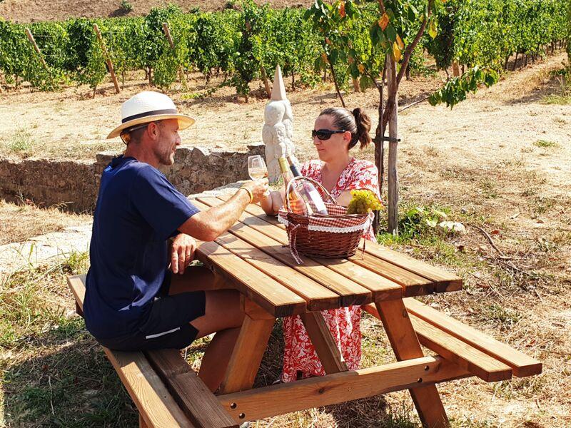 Panier vigneron au domaine de la navicelle à Le Pradet - 0