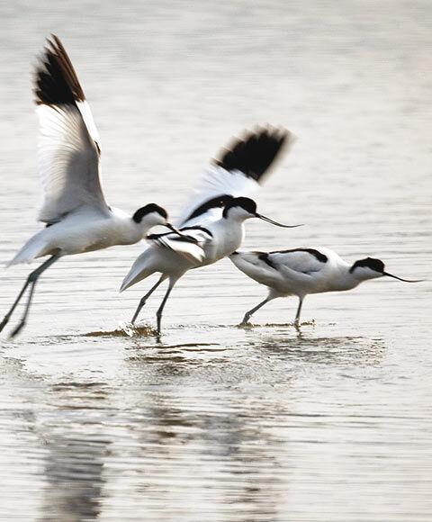 Bird watching in old salt marshes (Salins) à Hyères - 3