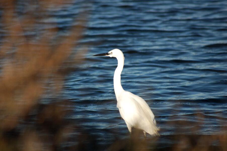 Bird watching in old salt marshes (Salins) à Hyères - 0