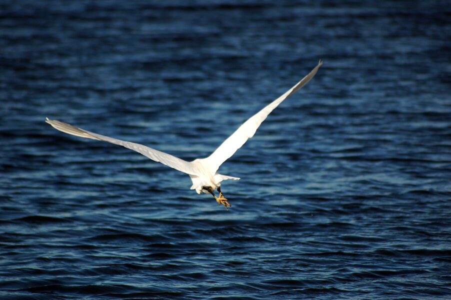 Bird watching in old salt marshes (Salins) à Hyères - 4