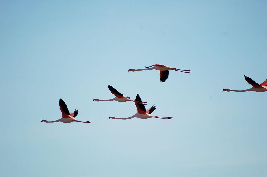 Bird watching in old salt marshes (Salins) à Hyères - 6