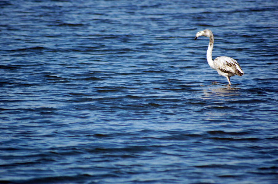 Bird watching in old salt marshes (Salins) à Hyères - 7