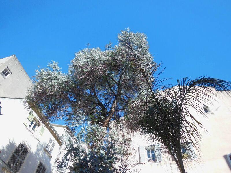 La nature dans la ville à Toulon - 3