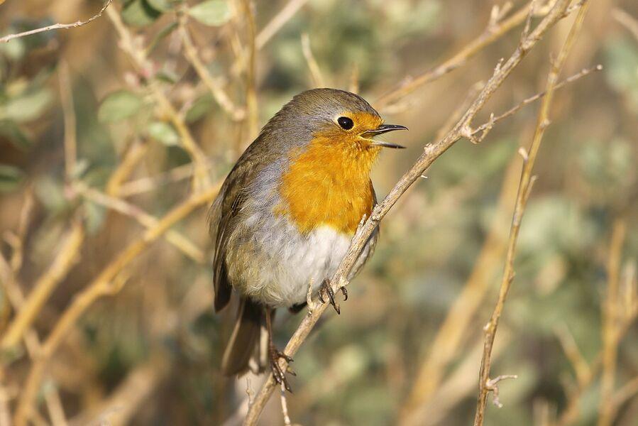 Introduction to birdsong at the Lieurette à Hyères - 0