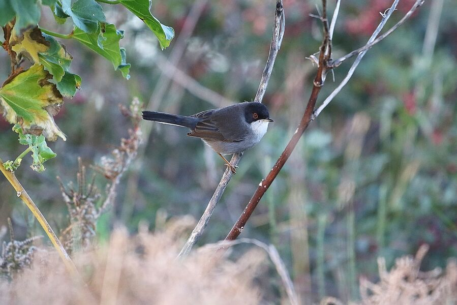 Introduction to birdsong at the Lieurette à Hyères - 3