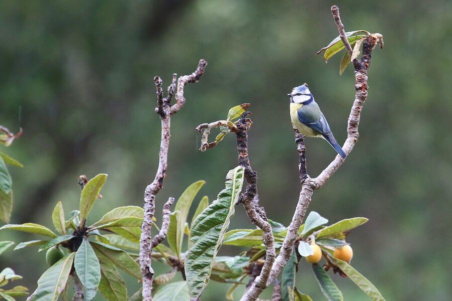 Introduction to birdsong at the Lieurette à Hyères - 4