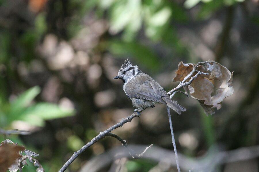 Introduction to birdsong at the Lieurette à Hyères - 5