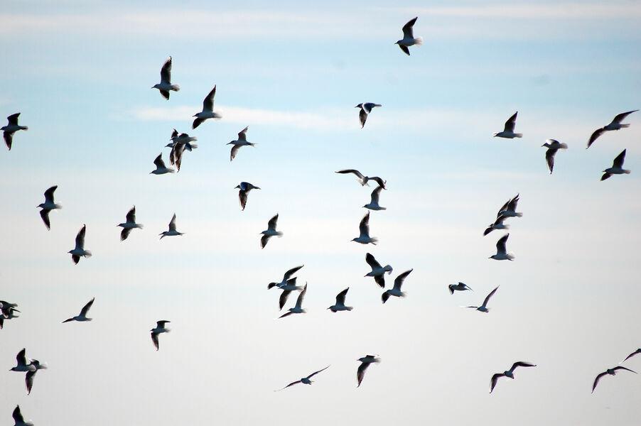 Introduction to birdsong at the Sauvebonne ponds à Hyères - 1