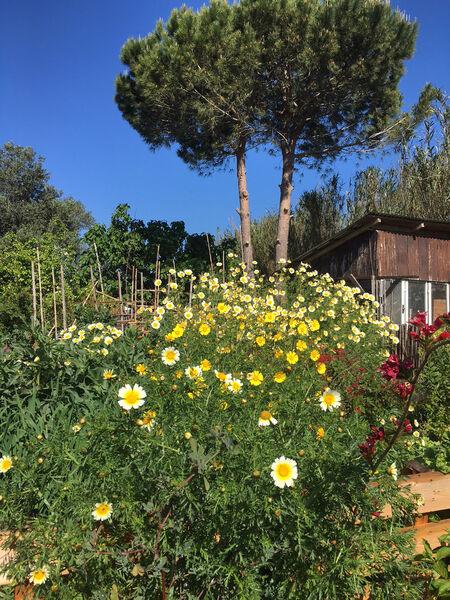 """Balade botanique """"A la découverte des plantes sauvages, comestibles et médicinales"""" à Hyères - 0"""