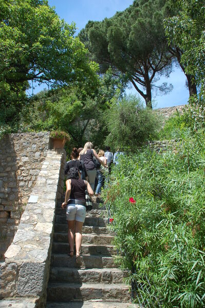 All the gardens of the world – Guided tour à Hyères - 0