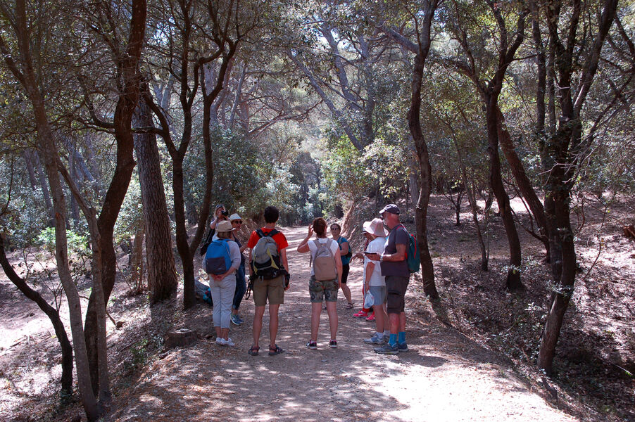 Guided Tour in Porquerolles with Charlotte à Hyères - 2